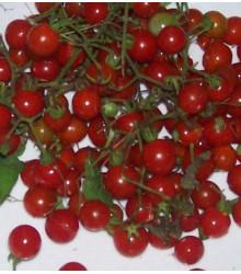 Semínka divokých rajčátek - Solnum pimpinellifolium - Divoká rajčátka - prodej semen - 6 ks