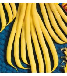 Fazol keříčkový Golddukat - Phaseolus vulgaris - prodej semen - 20 ks