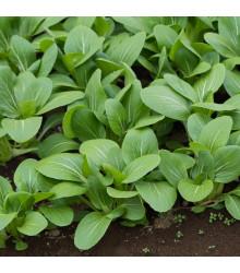 Hořčice zelená Komatsuna - Brassica rapa - prodej semen - 20 ks