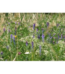 Modrá louka Zvonečková - prodej semen - 10 g
