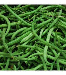 Semínka fazole BIO - Phaseolus Vulgaris - BIO Fazole keříčková Maxi - prodej semen - 20 ks