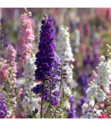 Stračka zahradní hyacintokvětá směs barev - Delphinium ajacis - prodej semen - 300 ks