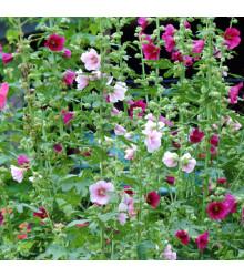 Topolovka Simplex směs - Althaea rosea - prodej semen - 40 ks