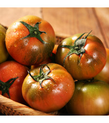 Rajče Černý muž - Solanum lycopersicum - prodej semen - 6 ks