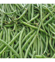 Fazol tyčkový Algarve - Phaseolus vulgaris - prodej semen - 20 ks