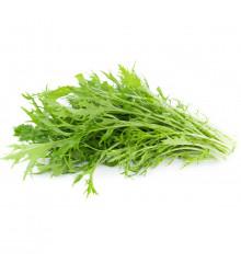 Mizuna Waido - Brassica campestris Japonica - prodej semen - 30 ks