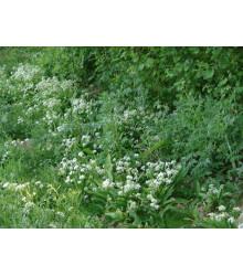 Květnatý podrost do stínu - prodej semen - 50 g