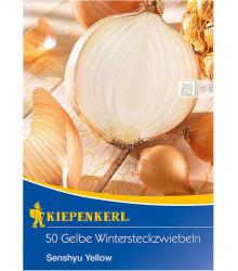 Cibule sazečka Senshyu Yellow - Allium cepa - prodej cibulek - 50 ks