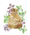 7 nejoblíbenějších druhů bazalky - Vánoční balíček semínek bazalky