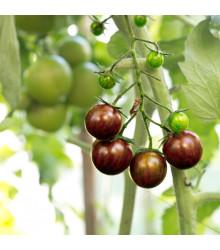 Rajče Black Zebra - Solanum lycopersicum - prodej semen - 7 ks