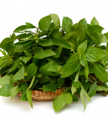 BIO Bazalka zelená - Ocimum basilicum - prodej bio semen - 200 ks