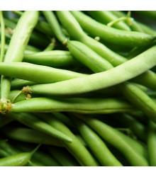 Fazol Neckarkönigin - Phaseolus vulgaris - prodej semen - 30 ks