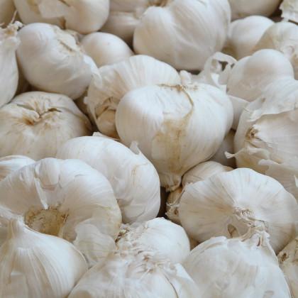 Sadbový česnek Lukan - Allium sativum - nepaličák - prodej cibulí česneku - 3–4 ks v balení