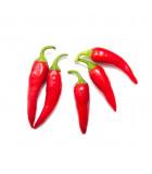 Pálivé papriky - chilli