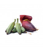 Banánovníky