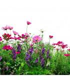Květinové louky
