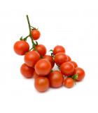 Divoká rajčata