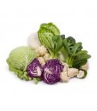 BIO košťálová zelenina