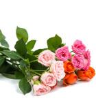 Okrasné rostliny
