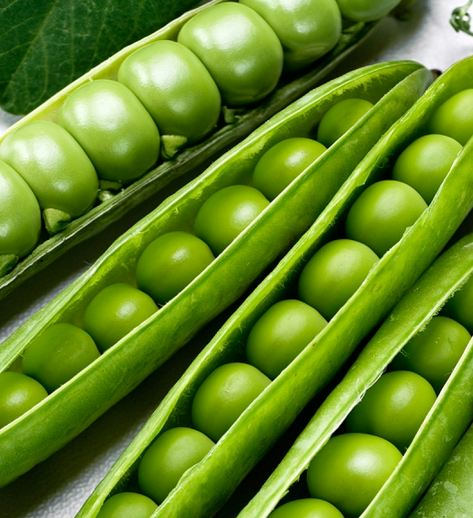 Semínka hrachu - Pisum sativum - Hrách dřeňový velmi raný - prodej semen - 40 ks
