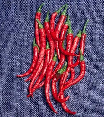 Semínka pepře - Cayenne pepper - Kajenský pepř - EXTRA dlouhý - prodej semen - 6 ks